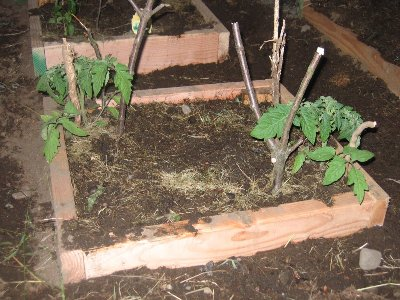 Organic Horticulture Guidelines That You Must Know